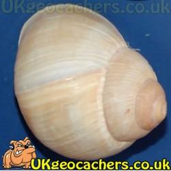 Magnetic Snail Nano Geocache