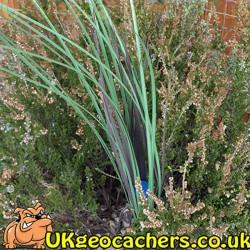 Grass Geocache