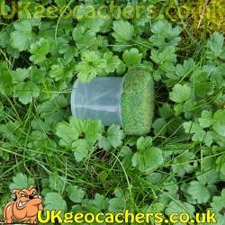 Moss Geocache