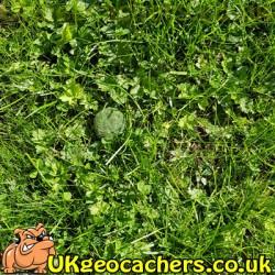 Moss 5ml Geocache